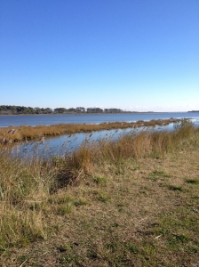 This scene was spotted during my run at Chincoteague National Wildlife Refuge on Nov. 15. (Vanessa Junkin photo)