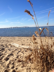 Here's a view of the Bay Bridge — formally known as the William Preston Lane Jr. Memorial Bay Bridge — from the beach at the Terrapin Nature Area. (Vanessa Junkin photo)