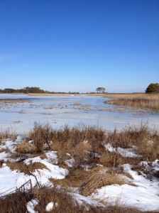 Here's a view from the Gordons Pond Trail in Rehoboth Beach. It's part of Cape Henlopen State Park. (Vanessa Junkin photo)