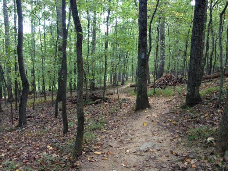 I enjoyed a run on the Seneca Creek Greenway Trail on Sunday, Sept. 20. (Vanessa Junkin photo)