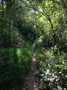 Here's a view from the Seneca Creek Greenway Trail, near where I turned around to head back to the start. (Vanessa Junkin photo)