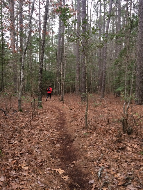 algonquin50k-trail-near-beginning