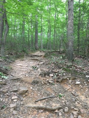 Trail with terrain featuring rocks and branches.