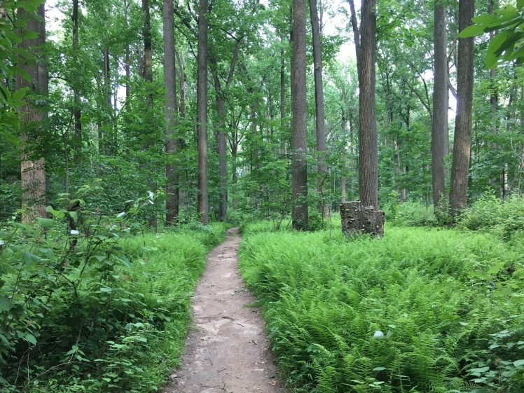 Thin trail through lots of lush green landscape, with trees ahead.