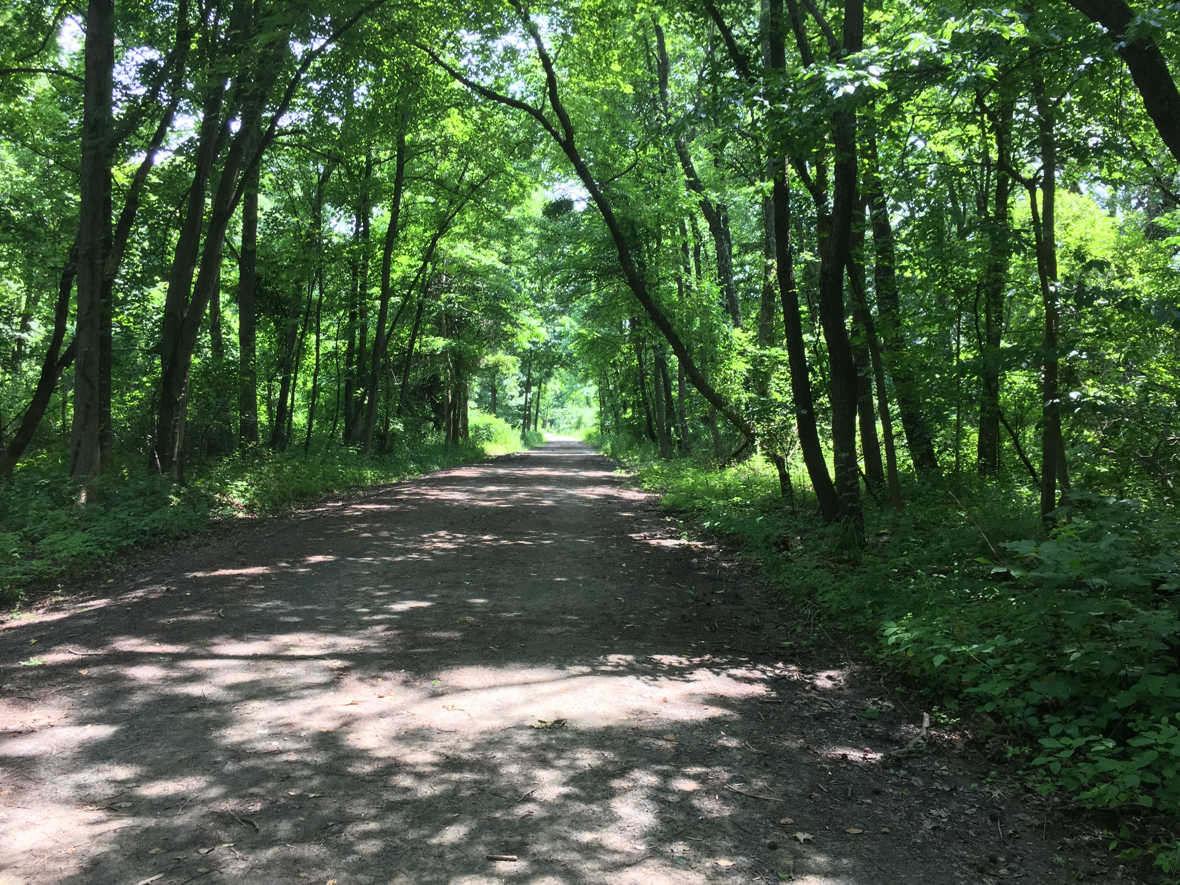 Wide trail with trees on both sides