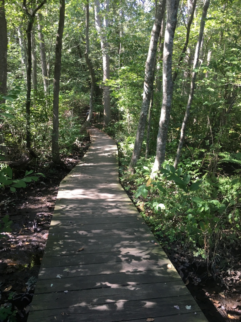 A boardwalk trail goes through the woods at Pemberton Park.