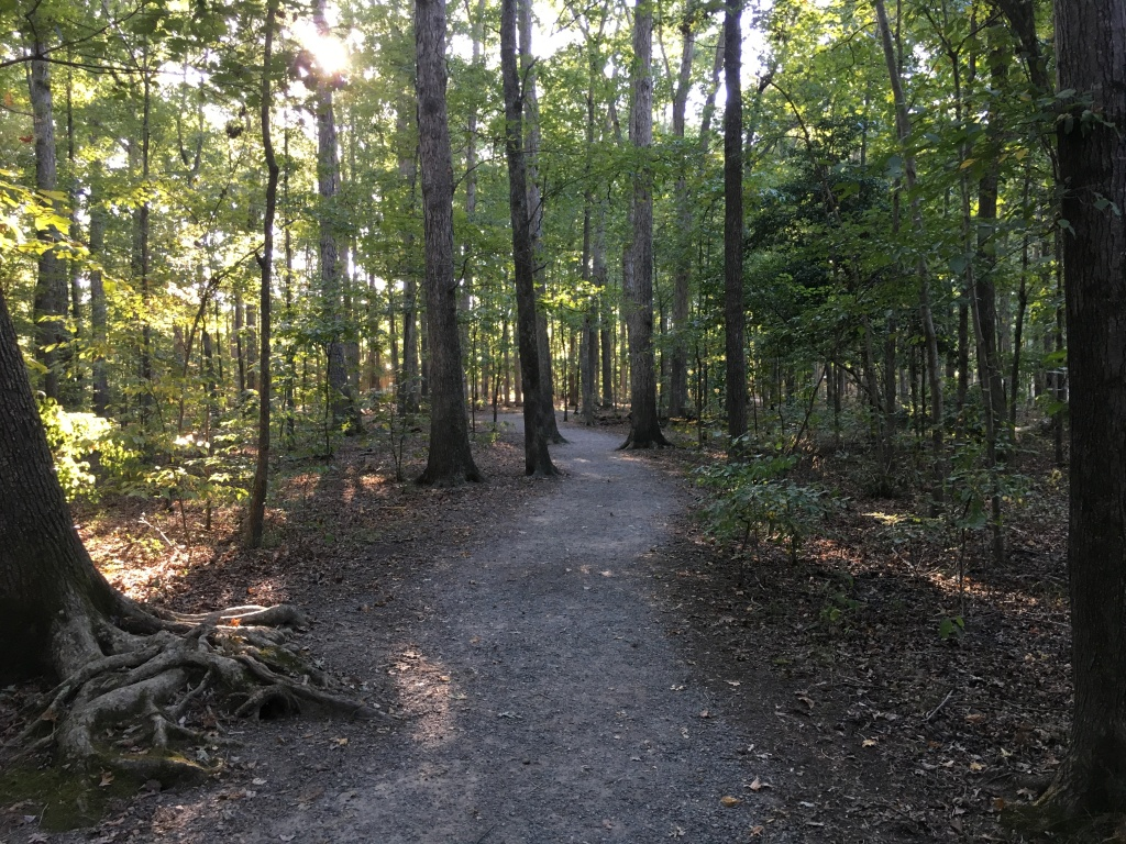 Unpaved trail at Deep Run Park with lots of trees.