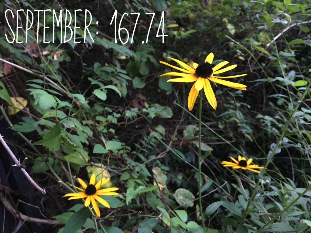 "Yellow flowers with the text ""September: 167.74"" overlaid."