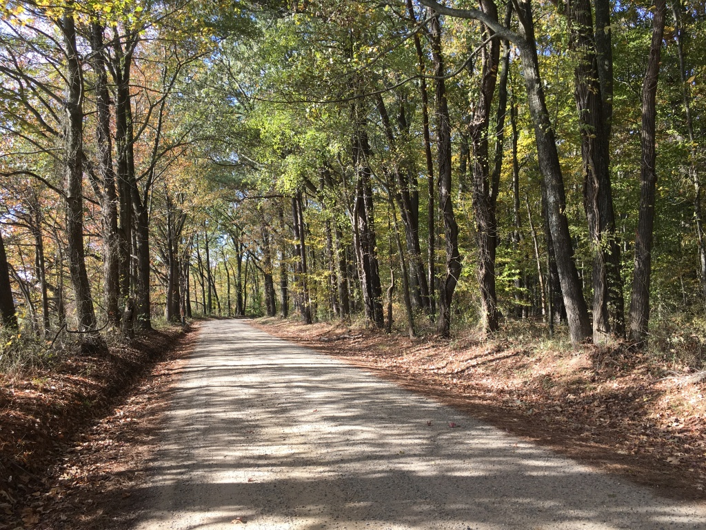 Dirt-like road with trees on both sides and leaves on both sides of the road.
