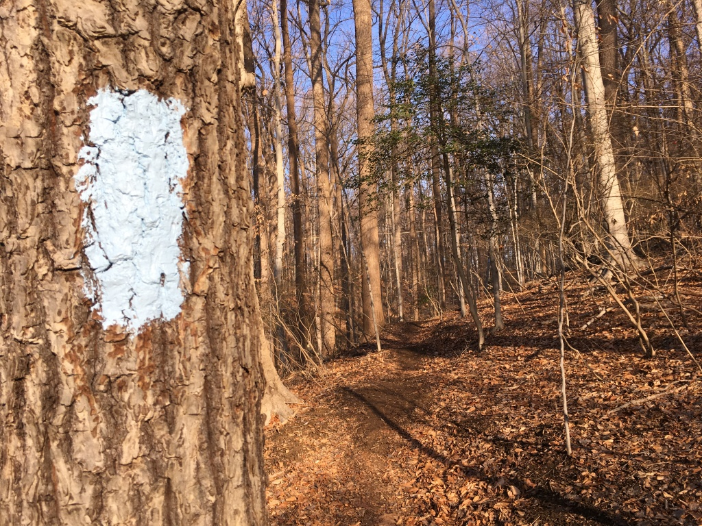 Close up of tree with trail marking on it, with the photo also showing a single track trail through the woods.