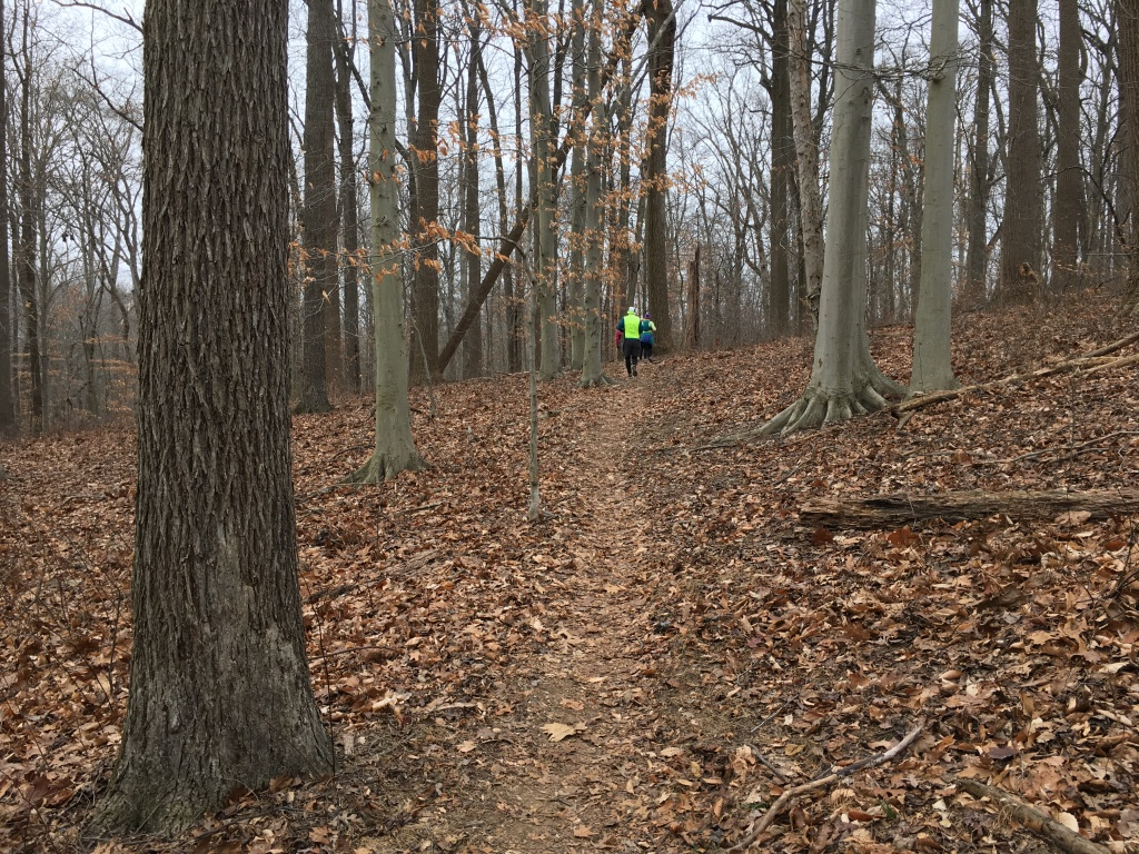 Runners in the distance on. a leaf-covered trail.