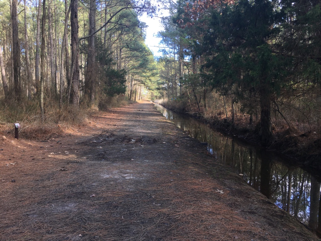 Flat dirt road with pine needles on it next to a deep water ditch (at right), with trees.