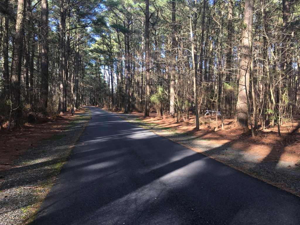 Paved road with trees surrounding it at Janes Island State Park.