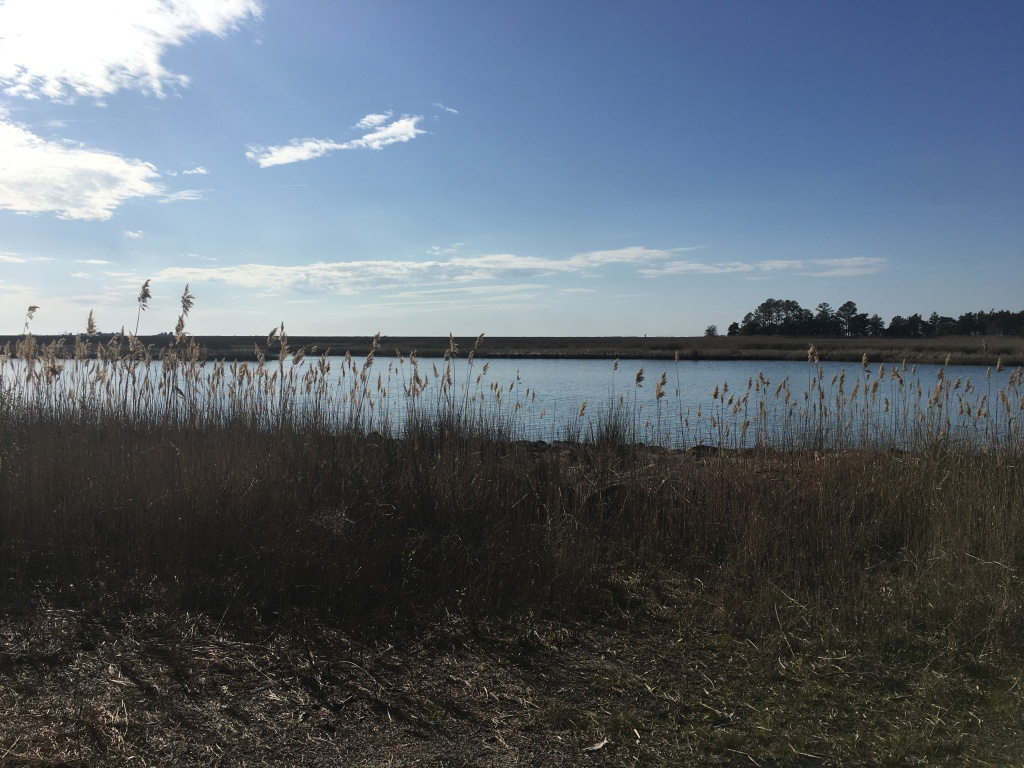 View of the water with some tall grasses sticking up in front and a blue sky.