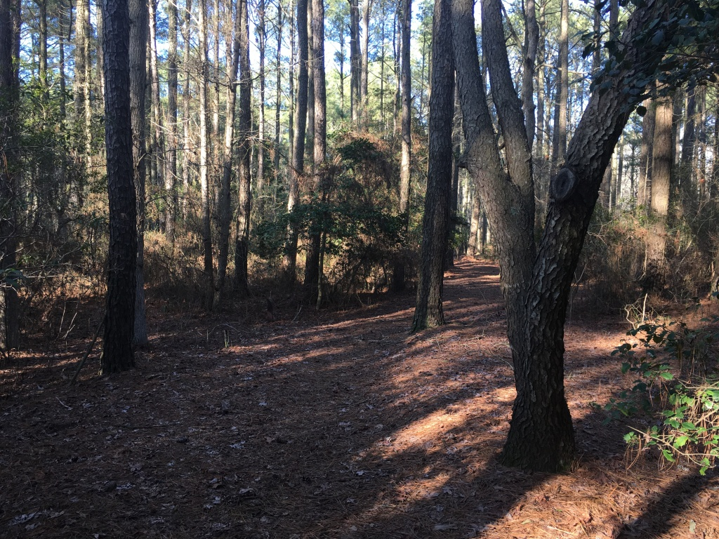 Wooded trail with trees.
