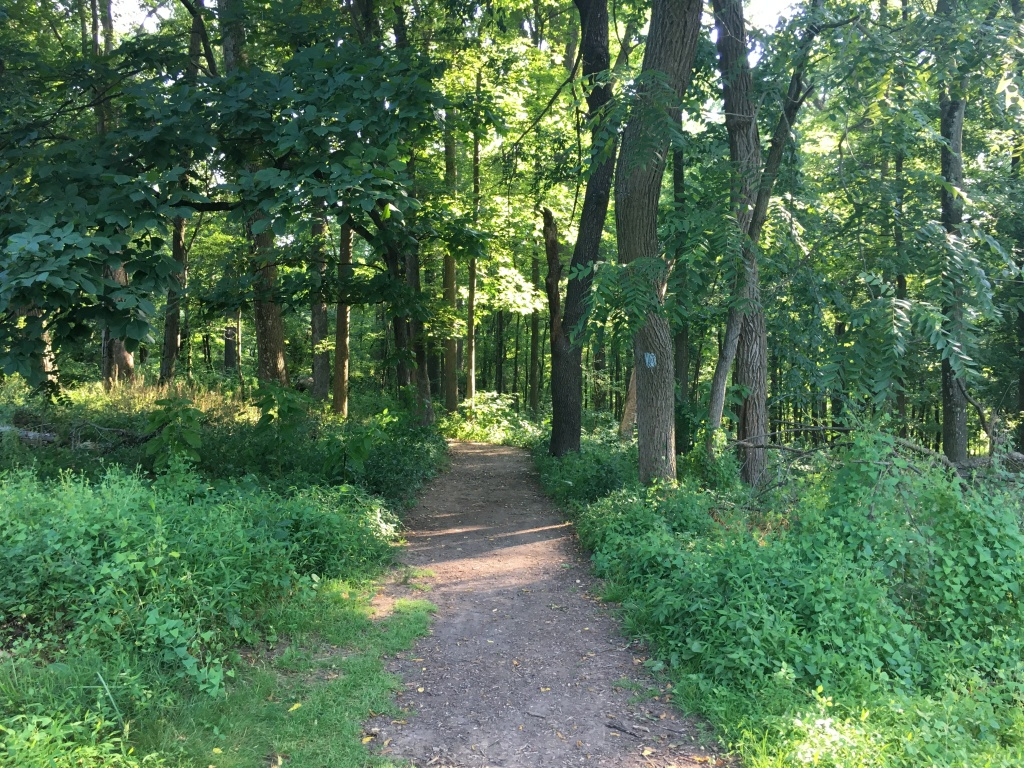 A brown trail in the woods with trees and greenery on both sides.