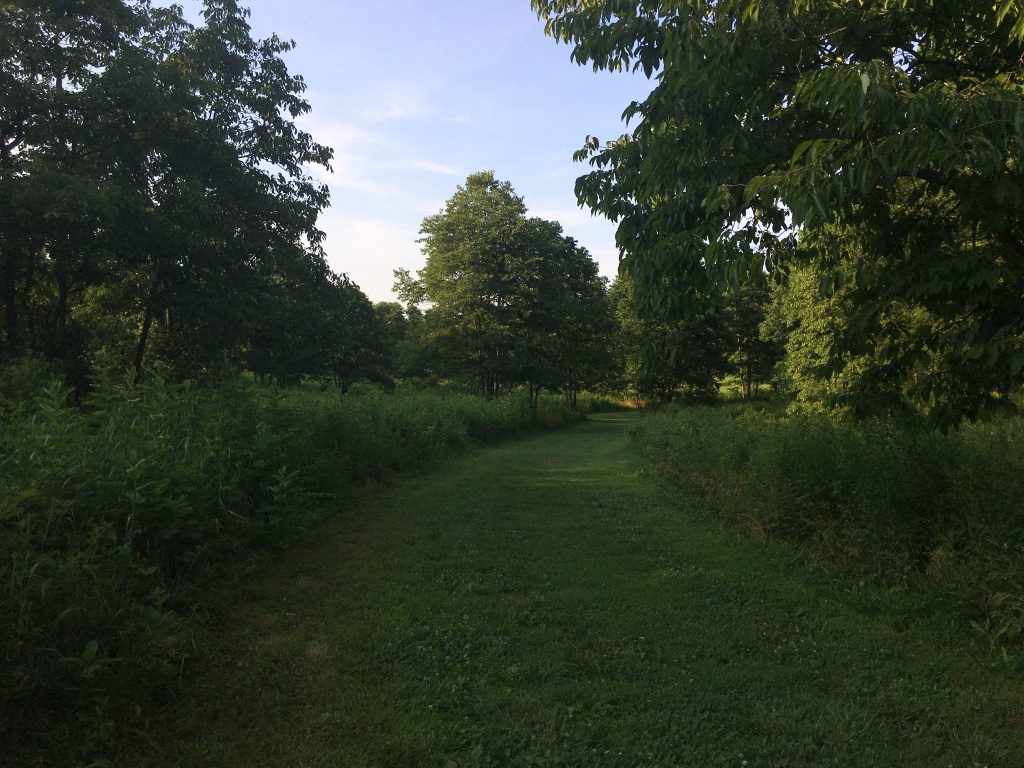 A mowed grass trail cuts through the green landscape.