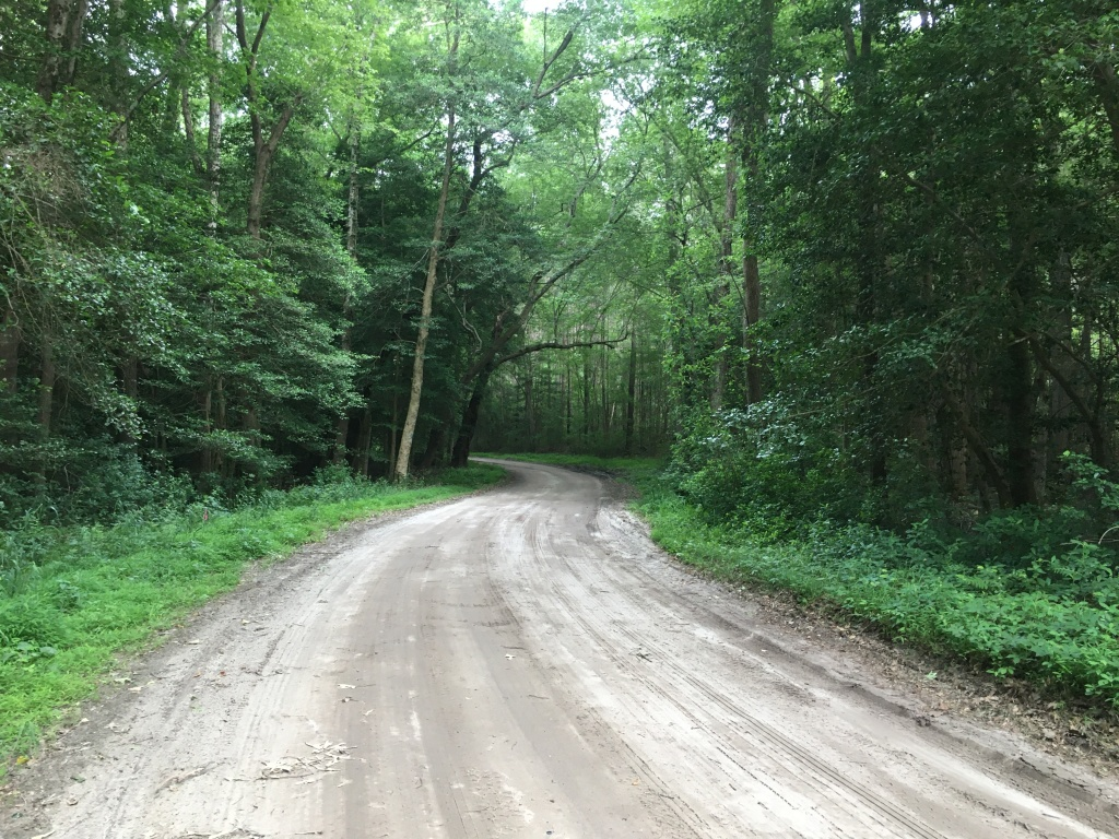 A dirt road winds through the green woods.