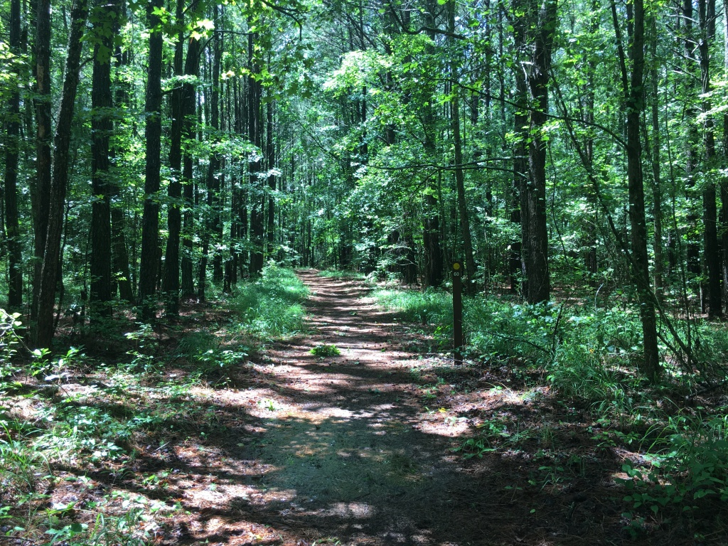 Trail going through the woods, with lots of green trees.